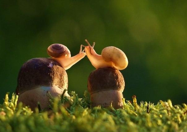 возможности - это грибы